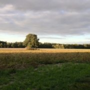 Baum in der Landschaft
